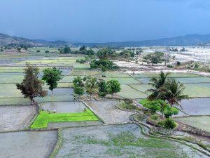 Rice Scene